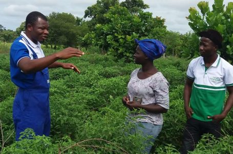 Vegetable farmers in Pusiga district call for PFJ support