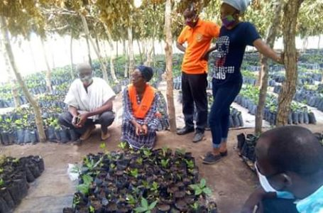 Gov't boost cashew production with 200,000 seedlings in Central Gonja